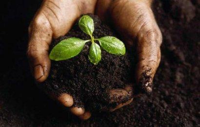 Иранские предприятия собираются выращивать на сельхозугодьях в Одесской области зерновые культуры