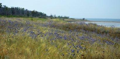 В Одесской области намерены создать 12 новых территорий  природно-заповедного фонда