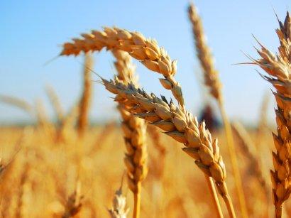 Весна еще не пришла, а в Одесском регионе уже начались весенне-полевые работы