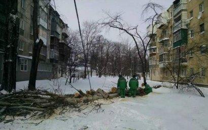 В Одессе на проезжую часть упало большое дерево, перекрыв проезд на несколько часов