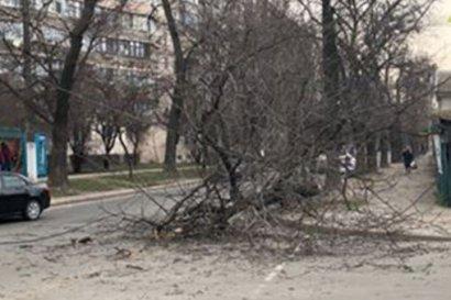 В Одессе очередное обрушение… дерева