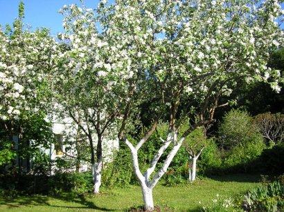 Белить бордюры и деревья – «устаревшая советская практика»?