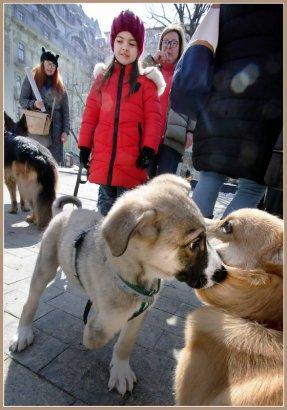 «Собачий» вопрос: все очень непросто