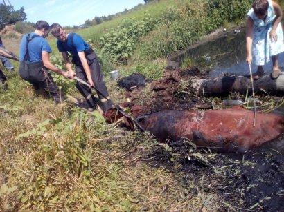 В Одесской области спасатели спасли…корову!