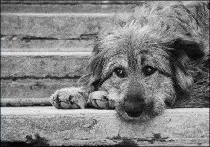В Одессе состоится благотворительный фестиваль в поддержку животных из приютов АНОНС