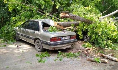 В Одессе два упавших дерева повредили сразу пять автомобилей