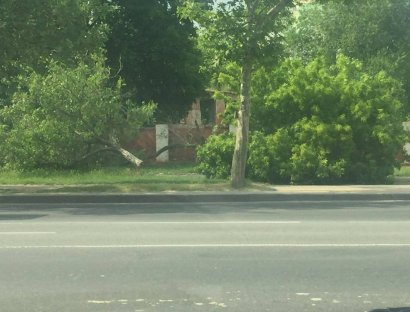 В Одессе незаконно спилили 12 деревьев