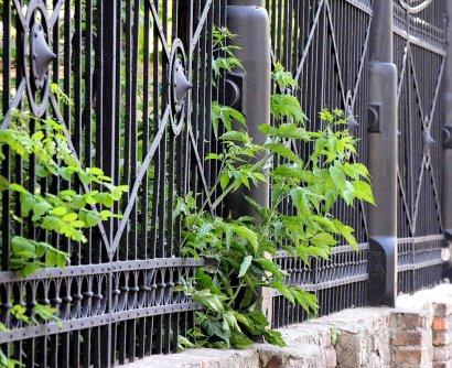 Забор из старинных пушек