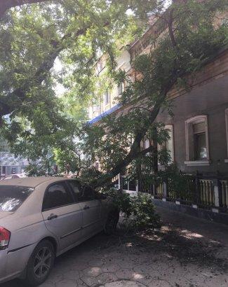В Одессе продолжают падать деревья. Даже в безветренную погоду!