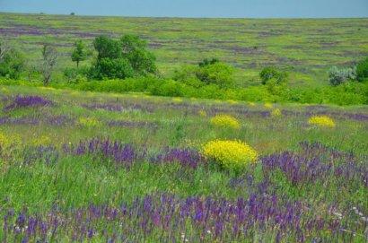 Национальному парку «Тарутинская степь» быть…или не быть?