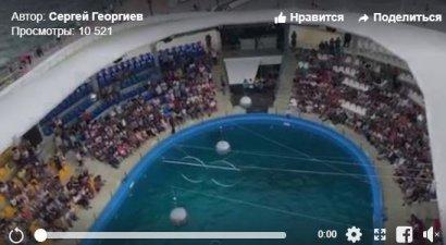 """В Одесском дельфинарии """"Немо""""во время шоу родился дельфиненок"""