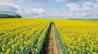 Фермеры Одесской области борются за урожай