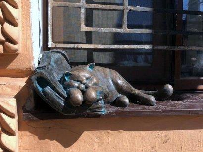 Лягушки-путешественницы и пропавший «кот Жванецкого»