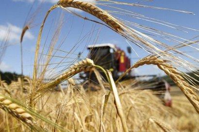 На юге Украины стартовала жатва