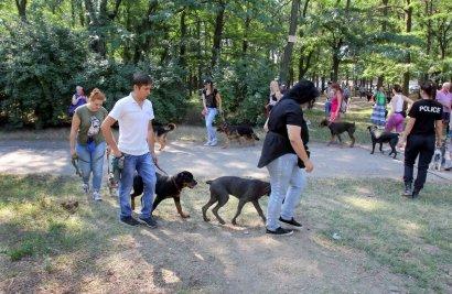 В Одессе открылась площадка для дрессировки собак