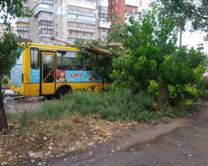 На улице Паустовского упало дерево на маршрутку