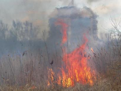 Только за одни сутки в Одесской области спасатели более сорока раз выезжали на пожары