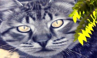 Коты оккупировали Одессу