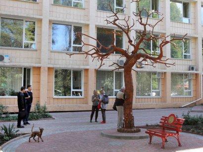 Кошачья оккупация Одессы продолжается