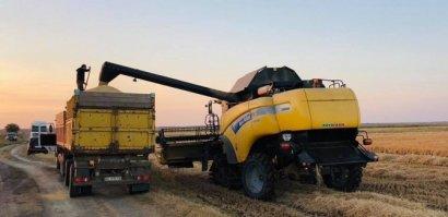 Аграрии Килийского района Одесской области собирают урожай риса