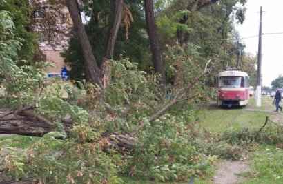 На Фонтане из-за упавшей ветки заблокировано движение трамваев