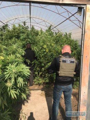 В Одесской области СБУ разоблачила торговцев наркотиками с оборотом до 200 тыс. грн в месяц