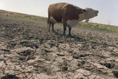 Сокращение поголовья домашнего скота в Одесской области приобретает пугающие масштабы