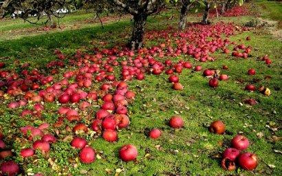 Яблоко позора действующей власти