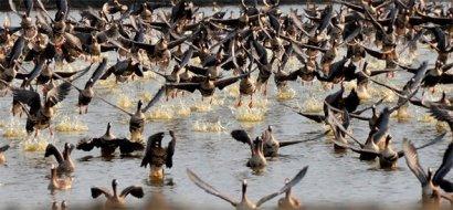 В заповеднике Аскания-Нова журавли остановились перед большим перелетом