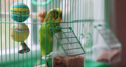 Волнистый попугай на Валааме научился Иисусовой молитве ВИДЕО