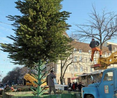 На Дерибасовской  начали устанавливать елку.