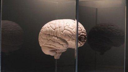 6 простых правил, как сохранить молодость мозга