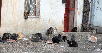 Коты дома Попудова