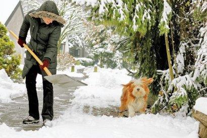 Сад и зимой нуждается в вашем внимании