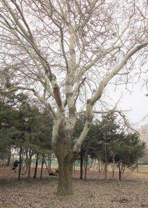 Олимпийский сквер на проспекте Шевченко преобразится к началу весны