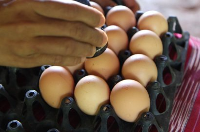 Канада заинтересована в импорте из Украины яиц, мяса и яблок