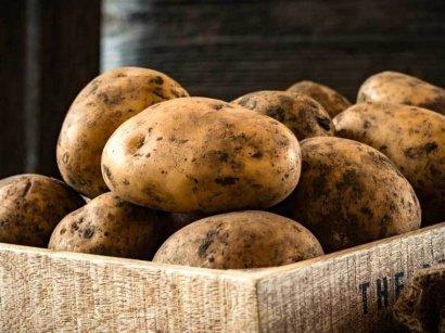 Европа отказалась пускать на свои рынки украинский картофель