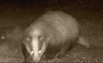 В «Тузловских лиманах» обнаружили редкого хищника