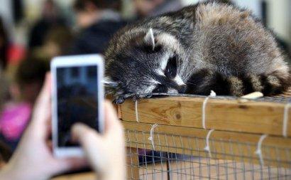 Укусы, царапины и опасные бактерии: Супрун рассказала, чем опасны контактные зоопарки