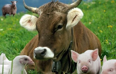 Через полгода изменятся требования к импорту в Украину животных и продукции животноводства