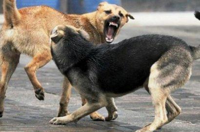 Когда жизнь – собачья