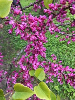 Цветущий сад Французского бульвара