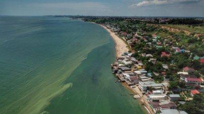 Зеленое море в Одессе: в мэрии рассказали о ситуации