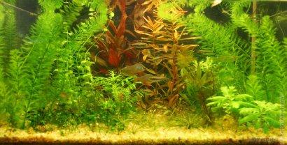 Одесситов приглашают на выставку редких аквариумных рыб