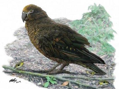 Ученые обнаружили гигантского попугая-каннибала