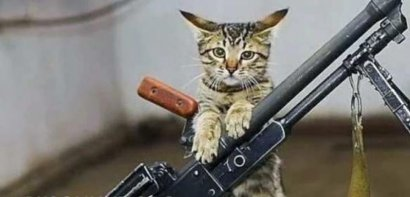 В Одессе конфликт из-за кошки закончился стрельбой
