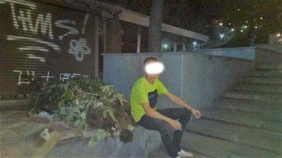 Полиция задержала вора, который воровал декоративные растения из Греческого парка