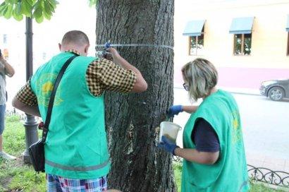 Зеленые друзья: за обман с «охраной» – давят кого попало