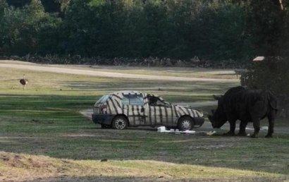 В Германии носорог атаковал автомобиль