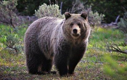 В США медведь залез в номер отеля и там уснул